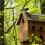 wooden bird house project